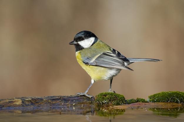 Closeup tiro com foco seletivo de um passarinho parado em um galho de madeira coberto de musgo