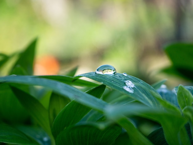 Closeup tiro da planta verde com gotas de água nas folhas do jardim