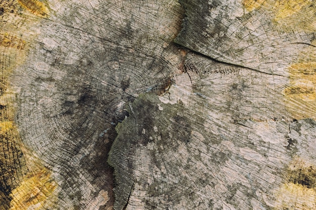 Closeup tiro da textura de madeira de uma árvore