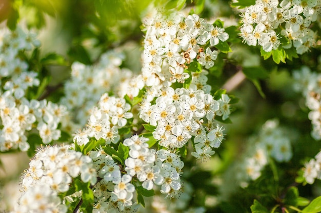 Closeup tiro das flores brancas em um dia ensolarado