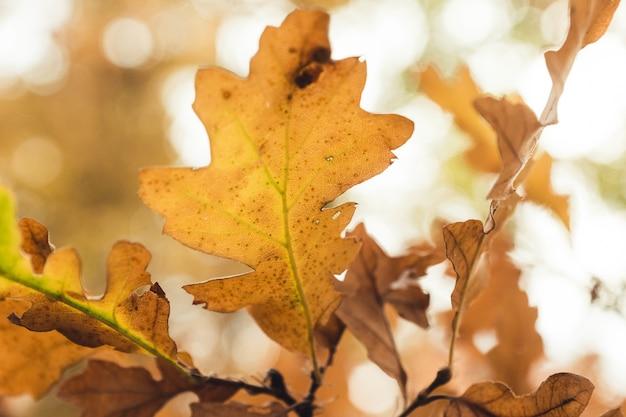 Closeup tiro das folhas de outono no fundo desfocado