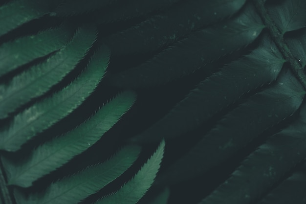 Closeup tiro das folhas verdes escuras de uma planta