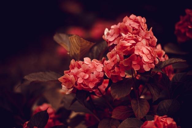 Closeup tiro das lindas flores cor de rosa no jardim em estilo vintage