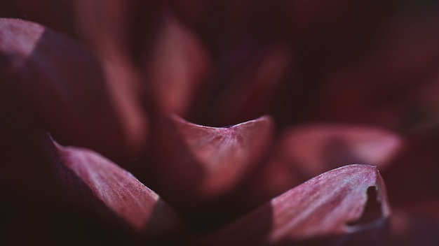 Closeup tiro das pétalas de uma flor rosa exótica