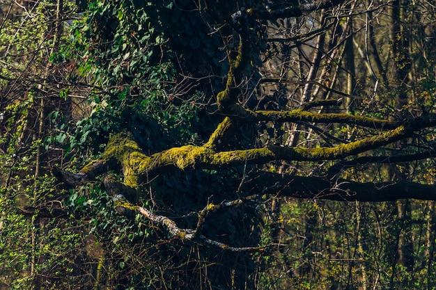 Closeup tiro de árvores e vegetação no parque maksimir em zagreb, croácia, durante a primavera