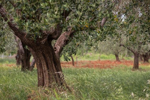 Closeup tiro de árvores em crescimento no campo sob a luz do sol