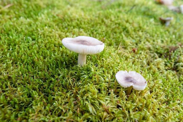 Closeup tiro de cogumelos em um parque