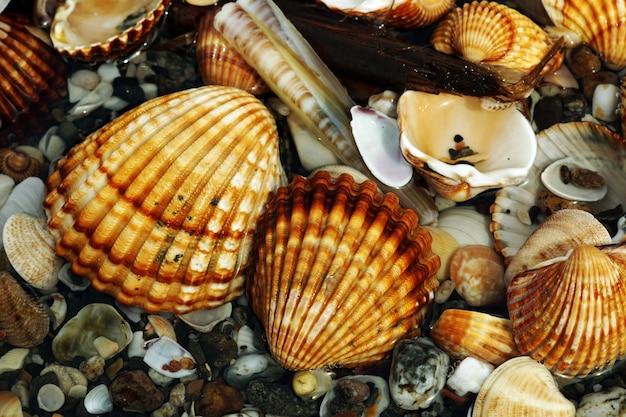 Closeup tiro de diferentes moluscos e caracóis colocados uns em cima dos outros