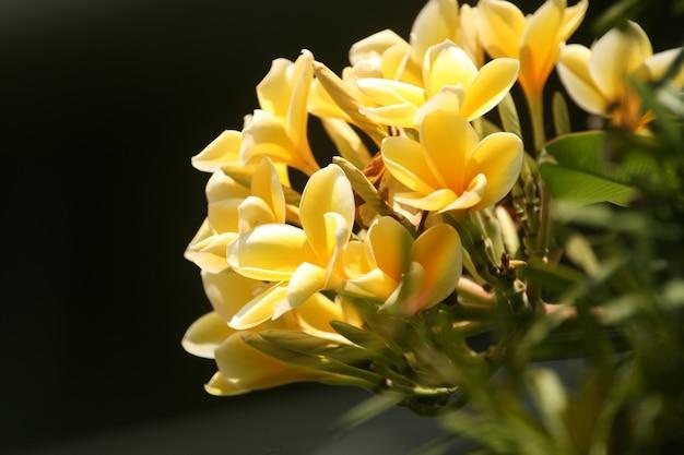 Closeup tiro de flores amarelas desabrochando na vegetação