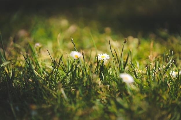 Closeup tiro de flores em um campo gramado em um dia suuny no golden gate park em sf