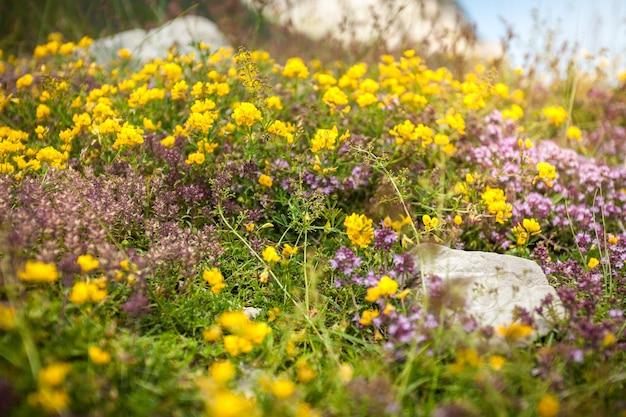 Closeup tiro de flores frescas coloridas crescendo em alta montanha