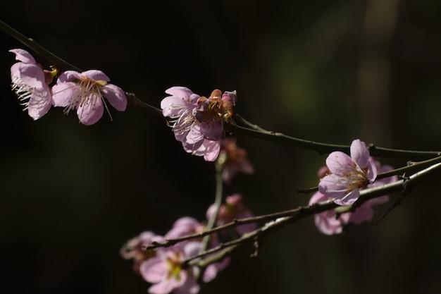 Closeup tiro de flores roxas no galho da árvore