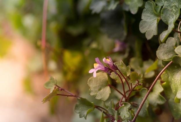 Closeup tiro de flores roxas perto de folhas verdes, com um fundo desfocado