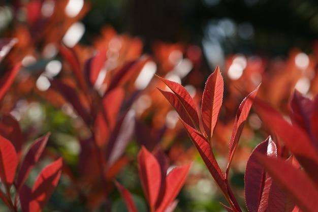 Closeup tiro de foco seletivo de folhas vermelhas com vegetação