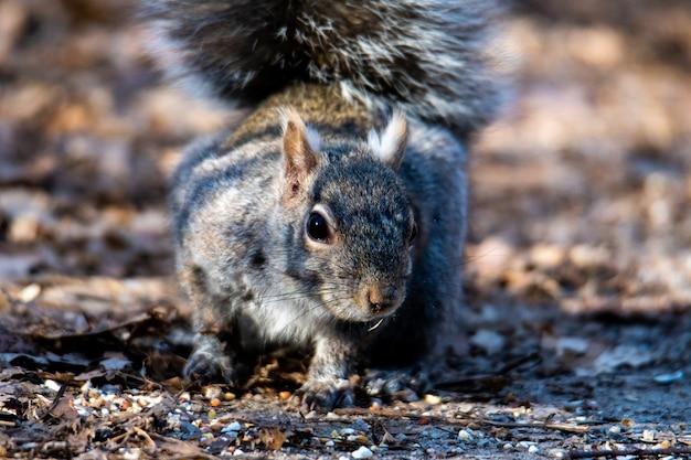 Closeup tiro de foco seletivo de um esquilo oriental