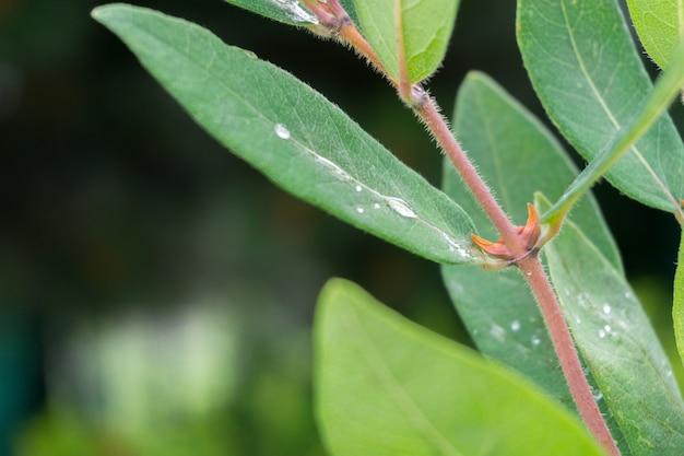 Closeup tiro de folhas cobertas com gotas de orvalho