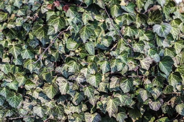 Closeup tiro de folhas na árvore durante o dia