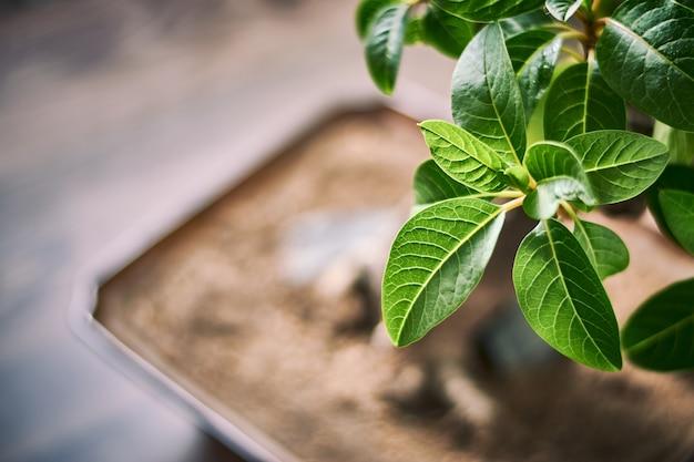 Closeup tiro de folhas verdes brilhantes com um fundo desfocado