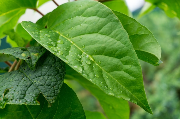 Closeup tiro de folhas verdes cobertas com gotas de orvalho