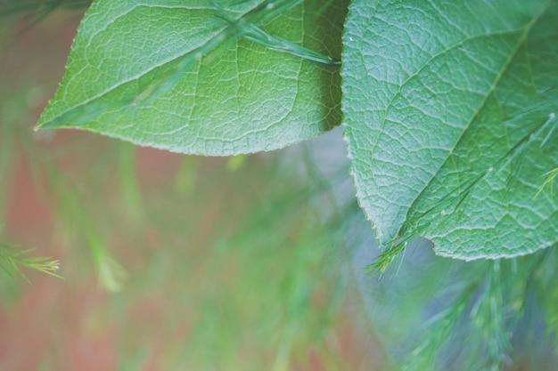 Closeup tiro de folhas verdes grandes, com uma natureza turva