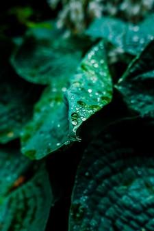 Closeup tiro de gotas de orvalho nas folhas verdes