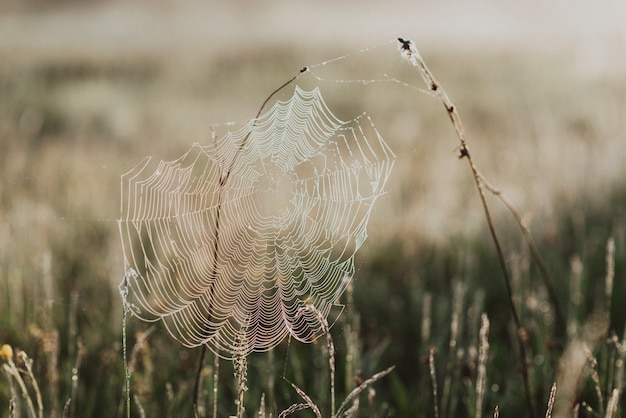 Closeup tiro de grama verde fresca em um campo com gotas de orvalho matinais e uma teia de aranha