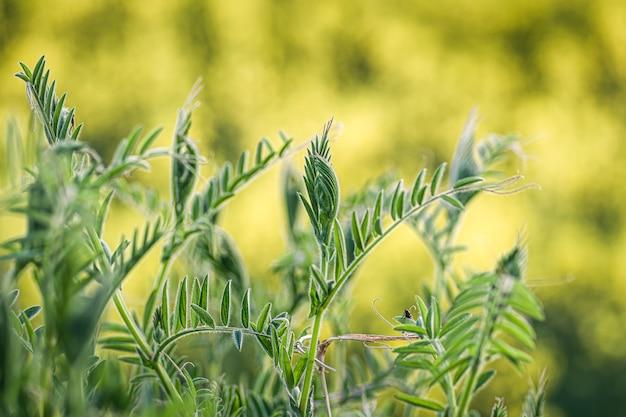 Closeup tiro de grama verde fresca em uma natureza borrada