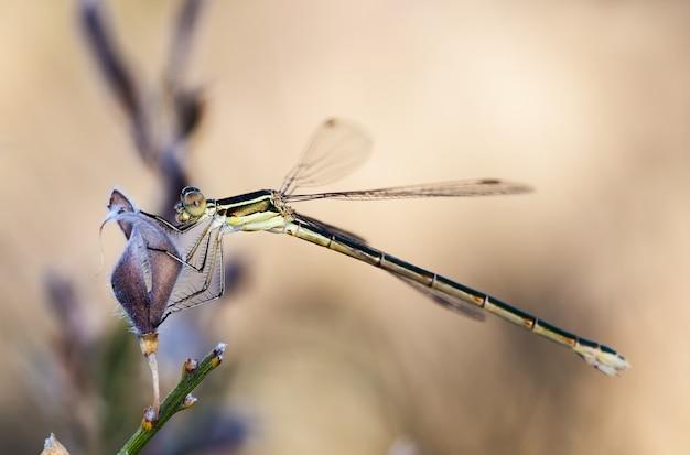 Closeup tiro de libélula em seu ambiente natural.