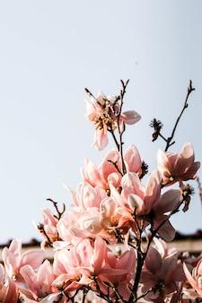Closeup tiro de lindas flores com pétalas delicadas