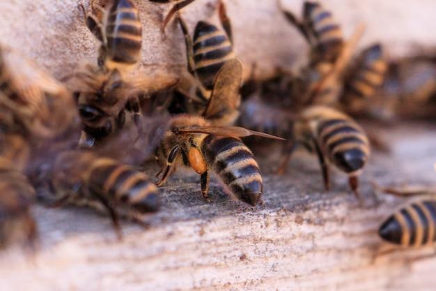 Closeup tiro de muitas abelhas em uma superfície de madeira