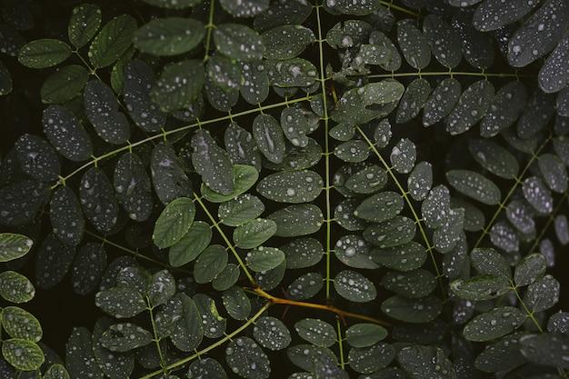 Closeup tiro de orvalho em folhas grossas de uma planta verde à noite
