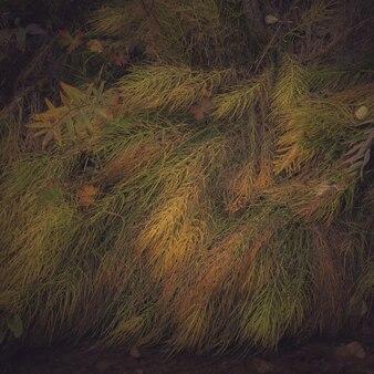 Closeup tiro de plantas selvagens coloridas no chão