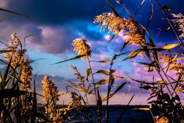 Closeup tiro de ramos de erva-doce com céu nublado