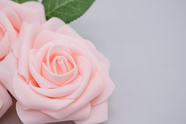 Closeup tiro de rosas cor de rosa isoladas em um fundo azul com espaço de cópia