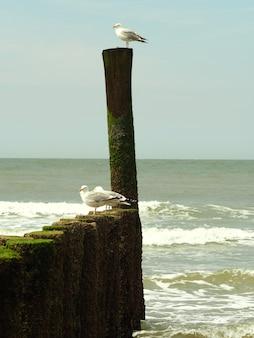 Closeup tiro de três gaivotas brancas em pé sobre um objeto de madeira