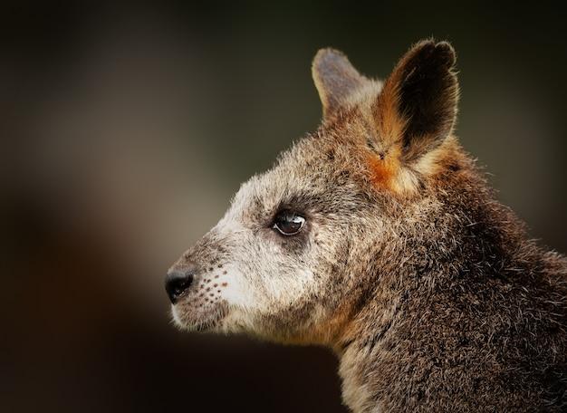 Closeup tiro de um bebê canguru