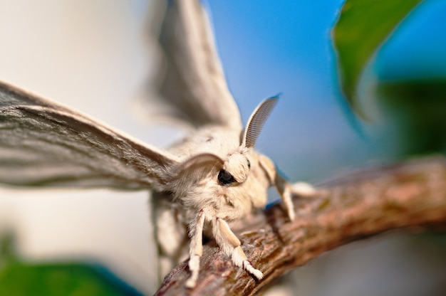 Closeup tiro de um bicho-da-seda branco com um fundo desfocado