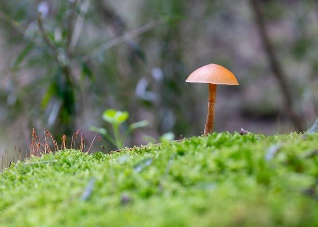 Closeup tiro de um cogumelo selvagem crescendo em um campo de grama