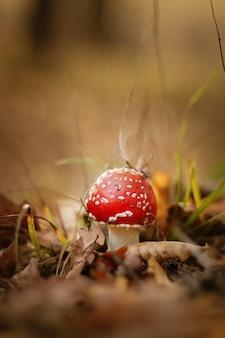 Closeup tiro de um cogumelo vermelho crescendo