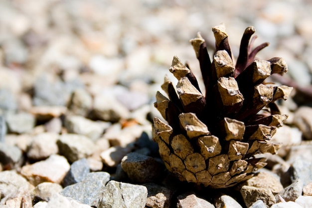 Closeup tiro de um cone de abeto em pequenas pedras