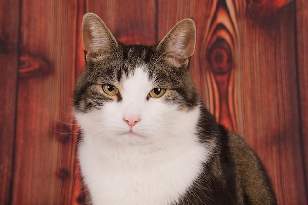 Closeup tiro de um gato sentado em frente a uma madeira, olhando para a câmera