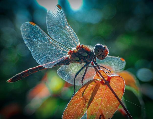Closeup tiro de um inseto com asas na rede na folha