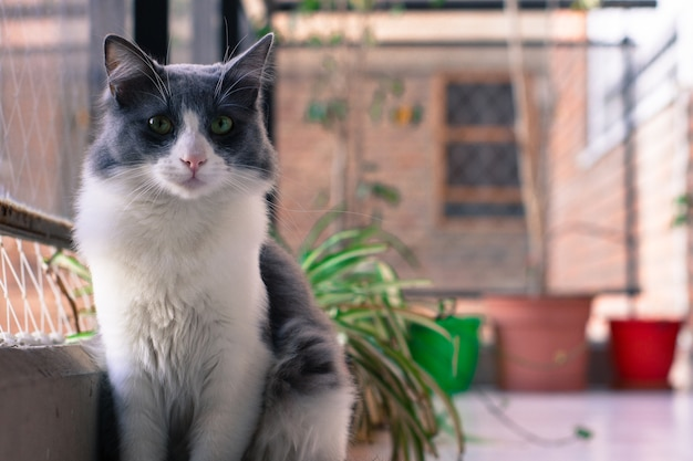 Closeup tiro de um lindo gato preto e branco sentado perto da janela com um fundo desfocado