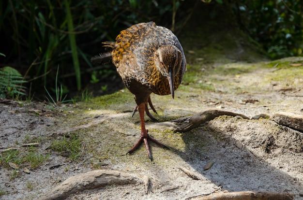 Closeup tiro de um pássaro na nova zelândia