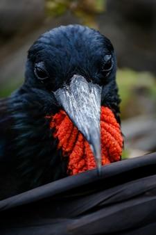 Closeup tiro de um pássaro preto e vermelho com um bico longo na natureza selvagem