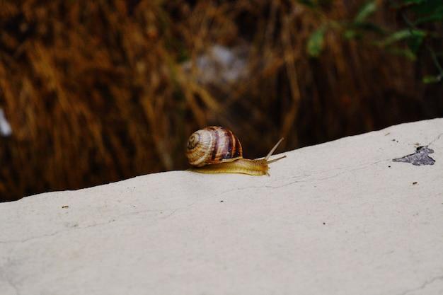 Closeup tiro de um pequeno caracol com uma concha marrom deslizando na ponta de uma pedra
