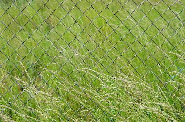 Closeup tiro de uma cerca de metal em um campo cheio de grama