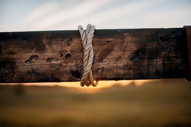 Closeup tiro de uma corda enrolada em uma planta de madeira