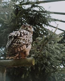 Closeup tiro de uma coruja sentado em uma prancha de madeira perto de vegetação