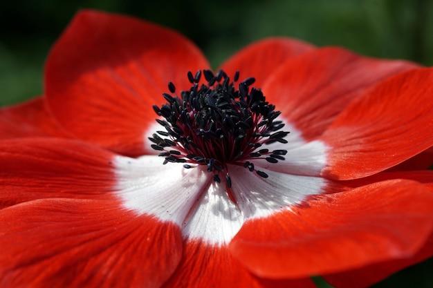 Closeup tiro de uma flor com estames